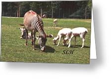 Zebra's Grazing Greeting Card