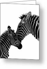 Zebras Mom And Baby Greeting Card