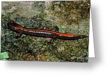 Zig-zag Salamander Greeting Card