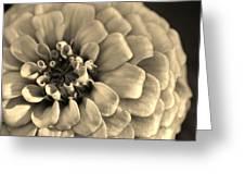 Zinna In Sepia Greeting Card