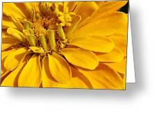 Zinnia Close Up Greeting Card