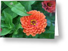 Zinnia Flower Stages Of Life Greeting Card