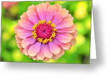 Zinnia Oklahoma Pink Greeting Card