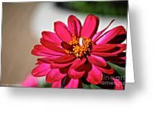 Zinnia Personality Greeting Card
