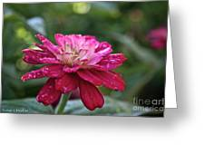 Zinnia Quenched Greeting Card