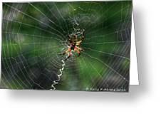 Zipper Spider Greeting Card