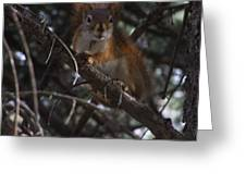 Nuts    Is My Name Greeting Card