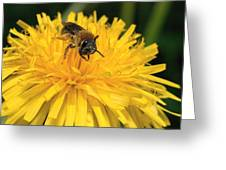 A Bee In A Dandelion Greeting Card