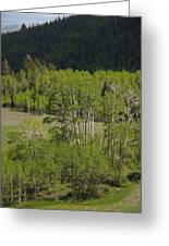Aspen Meadows IIi Greeting Card