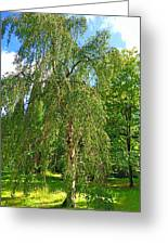 Birch Tree In Afternoon Greeting Card
