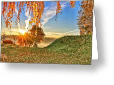 Birches At Sunrise  Greeting Card