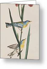 Blue Yellow-backed Warbler Greeting Card