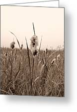 Broadleaf Cattail 1 Greeting Card