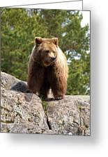 Brown Bear 4 Greeting Card