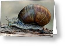 Burgundy Snail Greeting Card