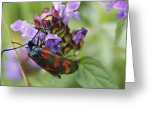 Burnet Moth Greeting Card