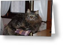 Cat On The Bar Greeting Card