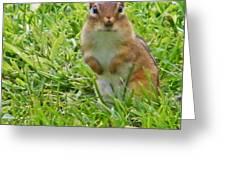 Chipmunck Standing     August Indiana Greeting Card