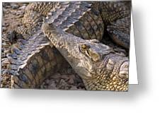 Crocodile - Time To Rest Greeting Card