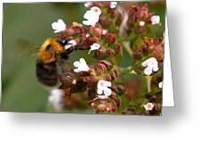 Cuckoo Bumblebee Greeting Card