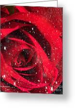 Dark Rose Greeting Card