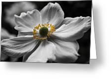Dreamy Japanese Anenome Honorine Joubert 4 Greeting Card
