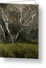 Dv Creek Trees Greeting Card