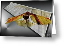 Eastern Amber Dragonfly 3d Greeting Card