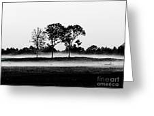Evening Mist Black And White Greeting Card