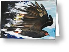 Everglades Snail Kite Greeting Card