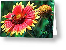 Firewheel Greeting Card