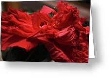 Flamenco Flower Greeting Card