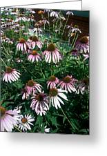 Flowers For Butterfly Feasting Greeting Card