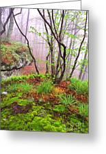 Foggy Spring Morning Greeting Card