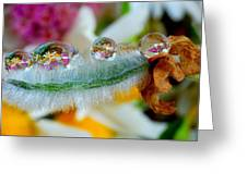 Friendly Company Of Rain Droplets On A Flower Cereal Greeting Card