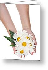 Giant Daisies For The Cosmetic  Industry Greeting Card
