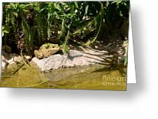 Green Frog Sitting At The Pond Greeting Card