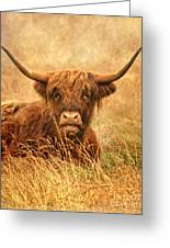 Happy Highlander Greeting Card