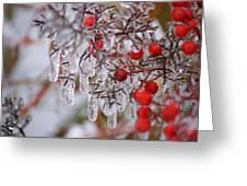 Holiday Ice Greeting Card