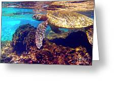 Honu On The Reef Greeting Card