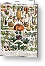 Illustration Of Vegetable Varieties Greeting Card