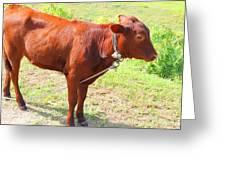 Jamaican Cow Greeting Card