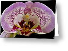 Kiss Of Orchid  Greeting Card