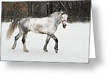 Light  Grey Horse Goes On A Winter Glade  Greeting Card