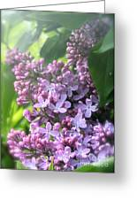 Lilacs On A Misty Morning Greeting Card