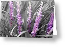 Liriope In Color Greeting Card
