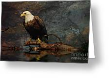 Magestic Eagle  Greeting Card