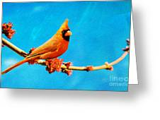 Male Northern Cardinal Perched On Tree Branch Greeting Card