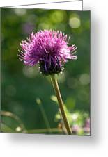 Melancholy Thistle Greeting Card