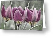 Miniature May Tulips Txt Greeting Card